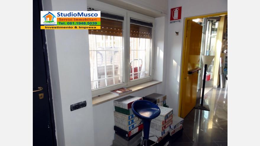 11STUDIO MUSCO