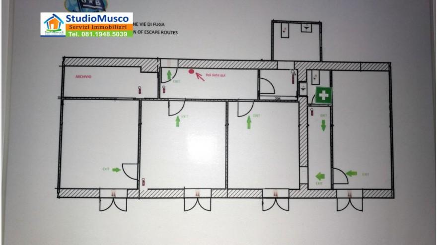 8STUDIO MUSCO