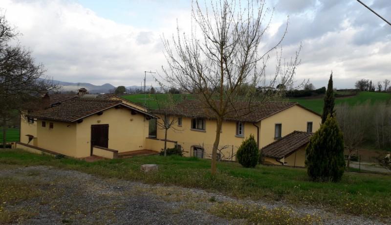 cerca  AZIENDA AGRICOLA VENDITA Borgo San Lorenzo