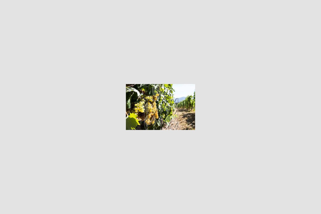 aa_AZIENDA AGRICOLA in VENDITA a SARZANA - GENERICA