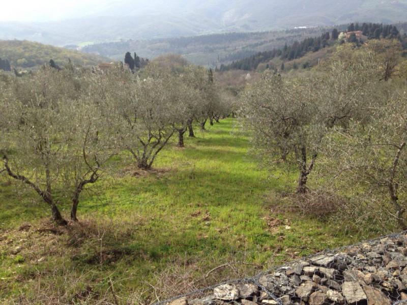 TERRENO AGRICOLO in VENDITA a CALENZANO - GENERICA