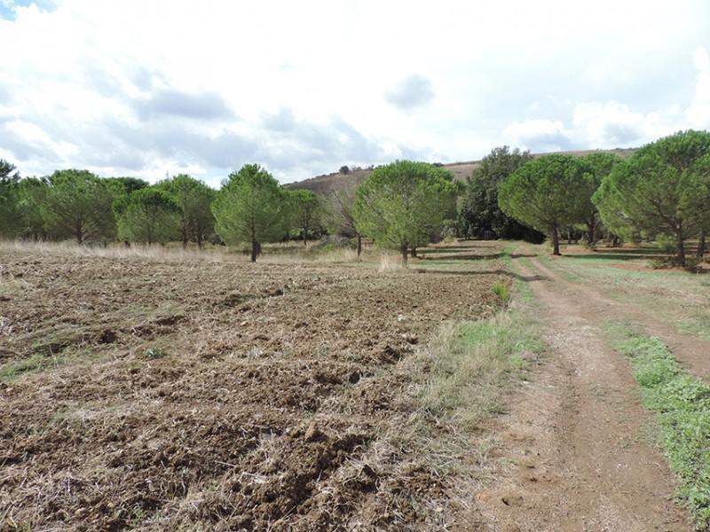 CASALE in VENDITA a ROCCASTRADA - RIBOLLA