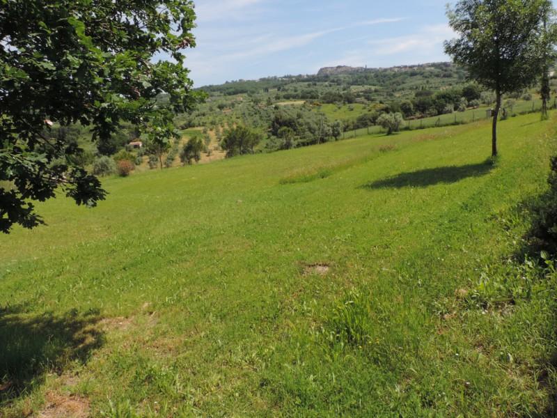 AZIENDA AGRICOLA in VENDITA a ROCCASTRADA - CENTRO