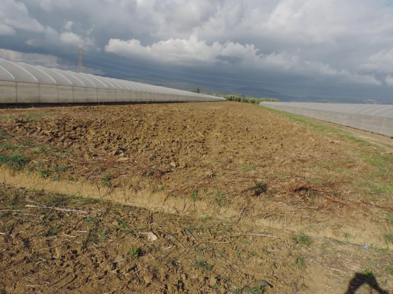 AZIENDA AGRICOLA in VENDITA a ROCCASTRADA - STICCIANO SCALO