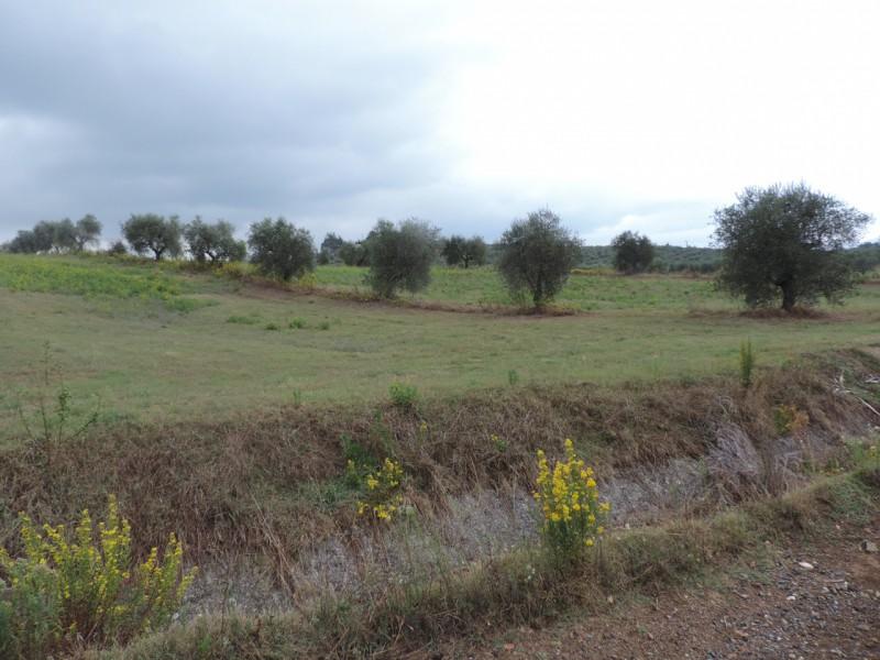 TERRENO AGRICOLO in VENDITA a ROCCASTRADA - RIBOLLA