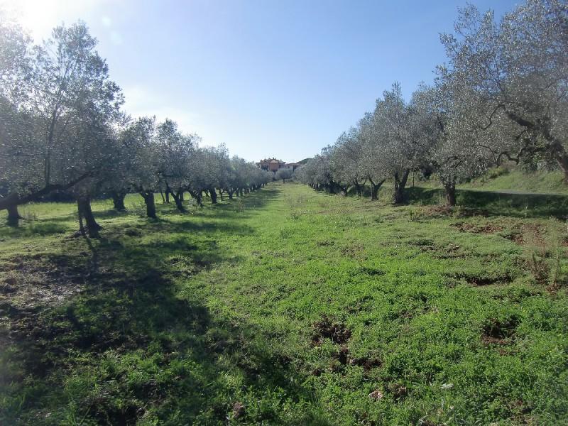 TERRENO AGRICOLO in VENDITA a ROSIGNANO MARITTIMO - CASTIGLIONCELLO