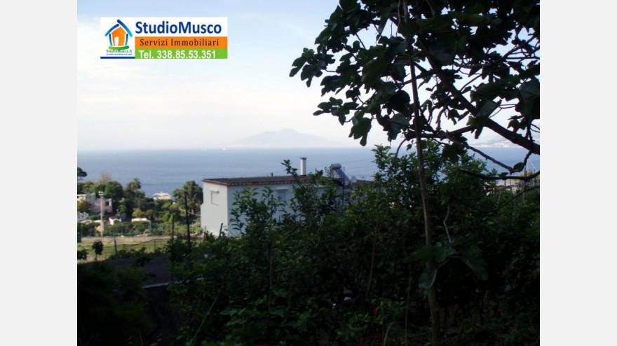 6STUDIO MUSCO